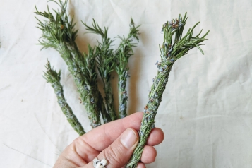 Rosemary Burning Bundles